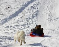 Bouée à neige - Huskys à Moscou