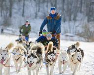 Chiens de traineau Huskys, Voyage Russie