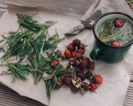 Voyage Russie - Husky, thé aux herbes