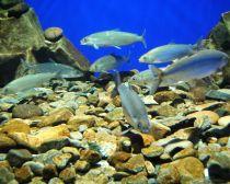 Voyage Baikal - Aquarium du musée