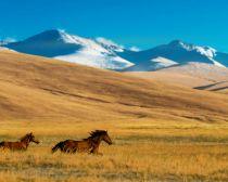 Kazakhstan - Altyn Emel