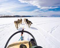 Voyage en Russie en hiver - Chiens de traineau sur le Baikal