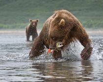 Voyage Kamtchatka - Lac Kouril