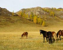 Voyage Altaï - Steppes de Kan