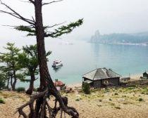 Lac Baïkal - Arbres sur pilotis