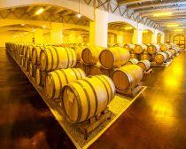 Autour de Krasnodar - Domaine viticole © Kuban-Vino