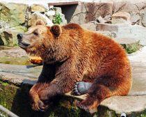 Visite Carélie - Zoo