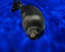Voyage Irkoutsk - Aquarium