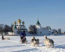 Voyage Kostroma - Chiens de traîneau