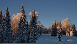 Taïga enneigée dans le nord de la Russie