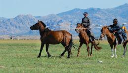 Mongolie - Vallée de l'Orkhon