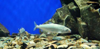 Visite musée du Baikal - Aquarium du musée