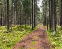 Carélie forêt