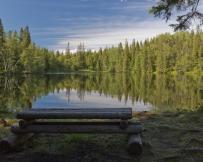 Iles Solovki forêt