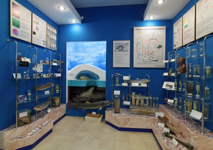 Musée du Baïkal